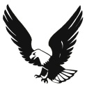 Black and White Hawk