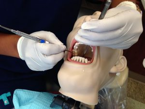 Student cleaning teeth