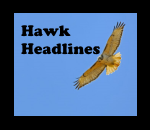 Hawk Headlines