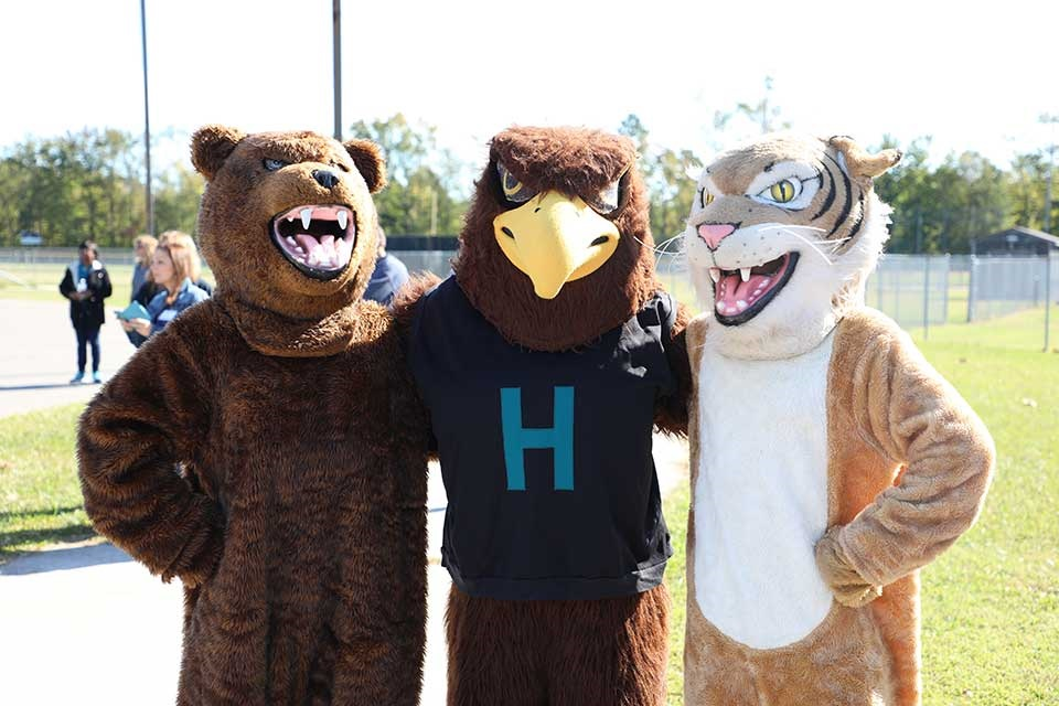 A bear a hawk and a wild cat