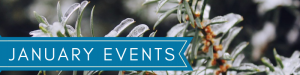 Close Up of Evergreen with snow - January Events