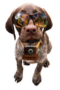 dog with sunglasses and camera